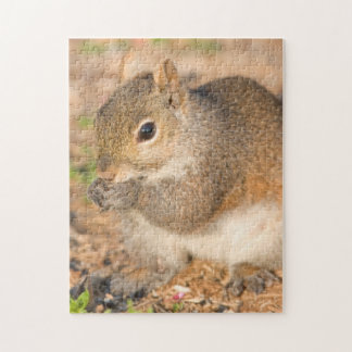 Gray Squirrel eating seeds Jigsaw Puzzle