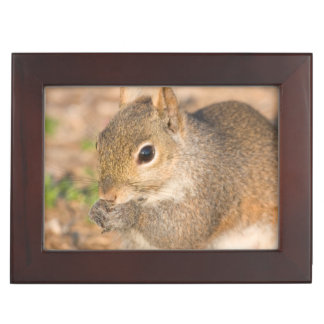 Gray Squirrel eating seeds Keepsake Box