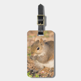 Gray Squirrel eating seeds Luggage Tag