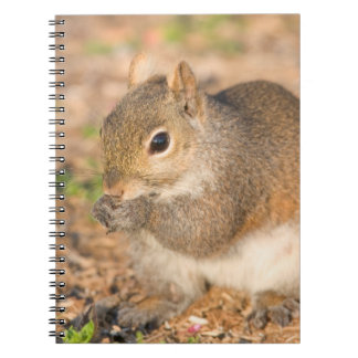 Gray Squirrel eating seeds Notebooks