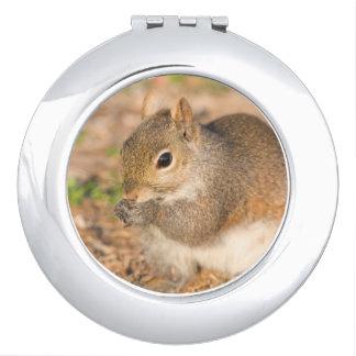 Gray Squirrel eating seeds Vanity Mirror