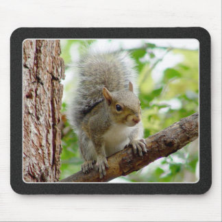 Gray Squirrel on a Branch Mousepad