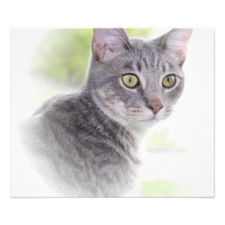 GRAY TABBY CAT PRINT ART PHOTO