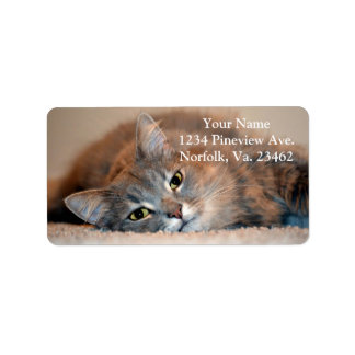 Gray, Tan, White Long-Haired Cat by Shirley Taylor Address Label
