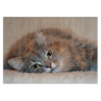 Gray, Tan, White Long-Haired Cat by Shirley Taylor Cutting Board