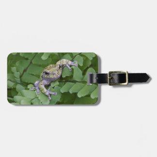 Gray tree frog on fern, Canada Luggage Tag