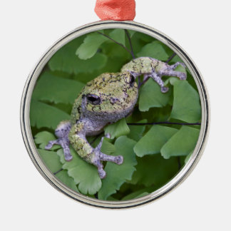 Gray tree frog on fern, Canada Silver-Colored Round Decoration
