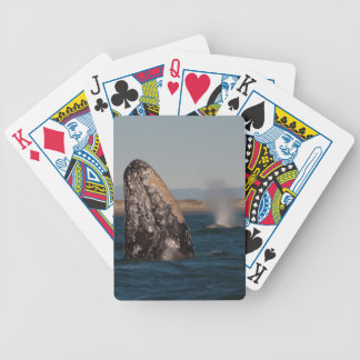 Gray Whale Head Portrait Bicycle Playing Cards