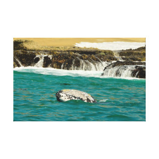 Gray Whale  off beach Gallery Wrap Canvas