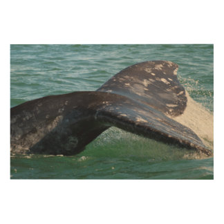 Gray Whale Tail Wood Wall Decor