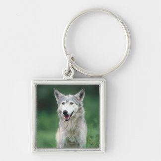 Gray wolf 2 Silver-Colored square key ring