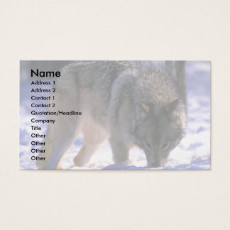 Gray Wolf at edge of snowy forest, eye contact Business Card