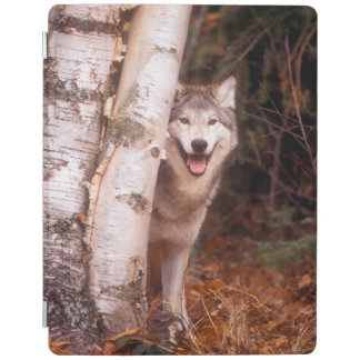 Gray Wolf Behind a Tree iPad Cover