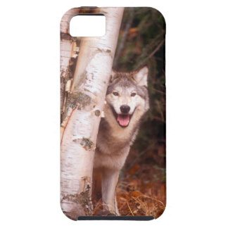 Gray Wolf Behind a Tree iPhone 5 Covers