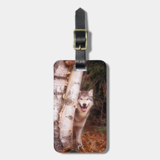Gray Wolf Behind a Tree Luggage Tag