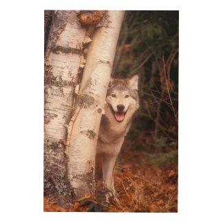 Gray Wolf Behind a Tree Wood Wall Art