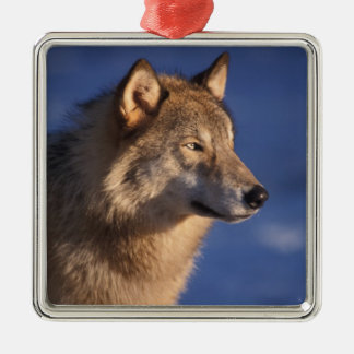 gray wolf, Canis lupus, in the foothills of 2 Christmas Ornament