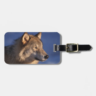 gray wolf, Canis lupus, in the foothills of 2 Luggage Tag