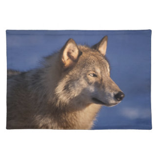 gray wolf, Canis lupus, in the foothills of 2 Placemat