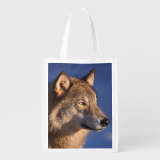 gray wolf, Canis lupus, in the foothills of 2 Reusable Grocery Bag