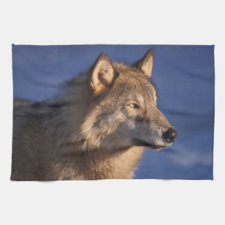 gray wolf, Canis lupus, in the foothills of 2 Tea Towel