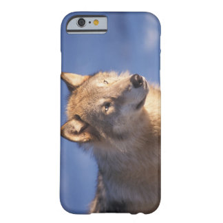 gray wolf, Canis lupus, in the foothills of the 2 Barely There iPhone 6 Case