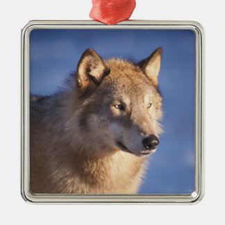 gray wolf, Canis lupus, in the foothills of the 2 Christmas Ornament