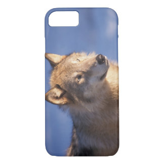 gray wolf, Canis lupus, in the foothills of the 2 iPhone 8/7 Case