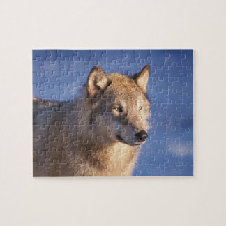 gray wolf, Canis lupus, in the foothills of the 2 Jigsaw Puzzle