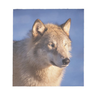 gray wolf, Canis lupus, in the foothills of the 2 Notepad