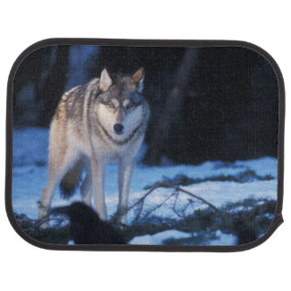 gray wolf, Canis lupus, in the foothills of the 3 Car Mat