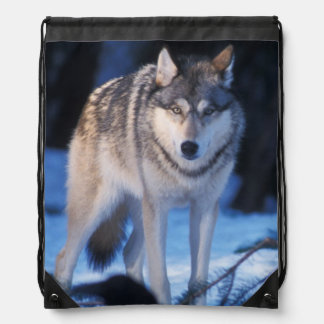 gray wolf, Canis lupus, in the foothills of the 3 Drawstring Backpacks