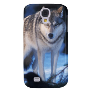 gray wolf, Canis lupus, in the foothills of the 3 Galaxy S4 Case