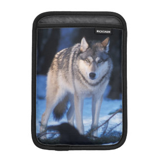 gray wolf, Canis lupus, in the foothills of the 3 iPad Mini Sleeve
