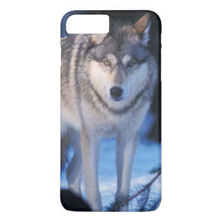 gray wolf, Canis lupus, in the foothills of the 3 iPhone 8 Plus/7 Plus Case