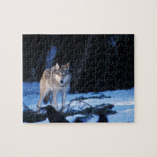 gray wolf, Canis lupus, in the foothills of the 3 Jigsaw Puzzle