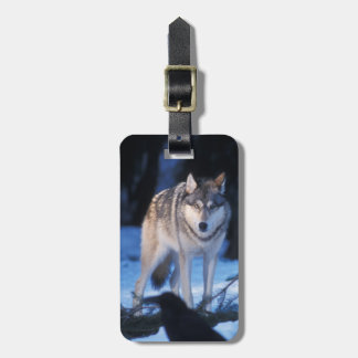 gray wolf, Canis lupus, in the foothills of the 3 Luggage Tag