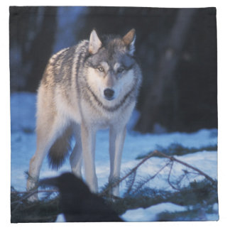 gray wolf, Canis lupus, in the foothills of the 3 Napkin