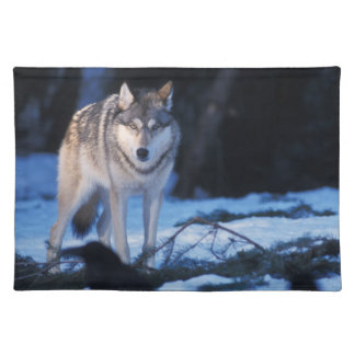 gray wolf, Canis lupus, in the foothills of the 3 Placemat