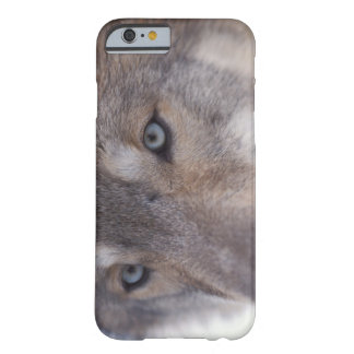 gray wolf, Canis lupus, in the foothills of the Barely There iPhone 6 Case