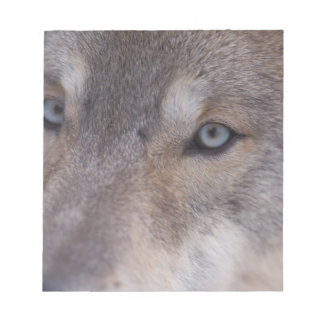 gray wolf, Canis lupus, in the foothills of the Notepad