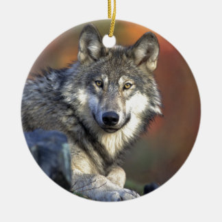 Gray wolf christmas ornament