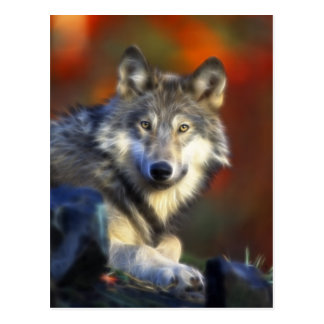 Gray Wolf Endangered Species Digital Photography Post Card