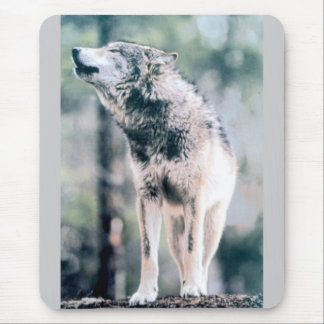 Gray Wolf in Grand Teton National Park Mouse Pad