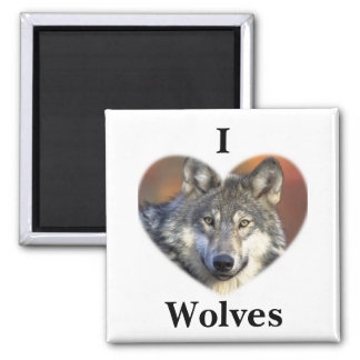 Gray Wolf Magnet