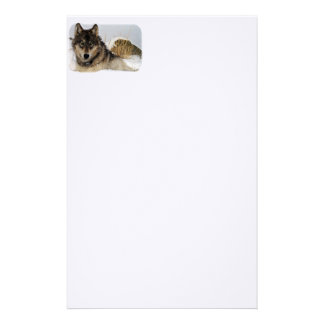 Gray Wolf or Timber Wolf Laying in the Snow Stationery