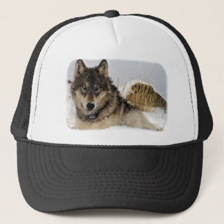Gray Wolf or Timber Wolf Laying in the Snow Trucker Hat