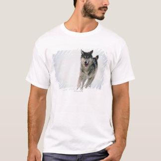 Gray wolf running T-Shirt