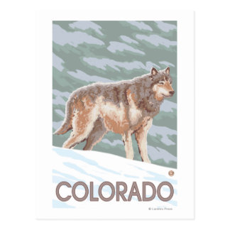 Gray Wolf StandingColorado Post Card