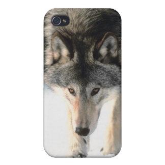 Gray wolf walking iPhone 4 case